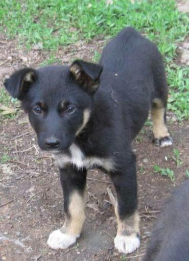 Ищу заботливых мам и пап щеночку в Бишкек