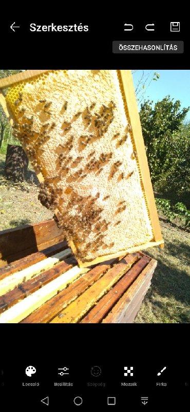 Ostalo | Senta: Pčela sa maticom 2019 g. Registrovani u dobrom zdravlju od rojeva do