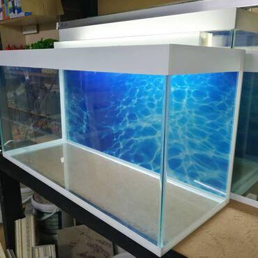Təzə akvarium 100 litrelik