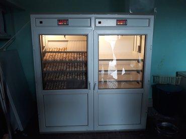 Bakı şəhərində Avtomatlaşdırılmış ən son rəqəmsal model inkubatorlar yumurtaların