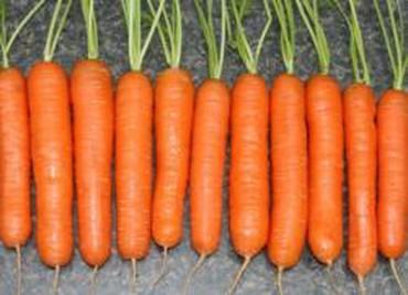 Семена и уличные растения - Сокулук: Семена моркови гибрид!