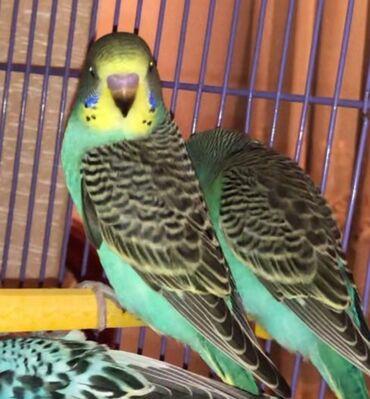 Животные - Лерик: Птицы