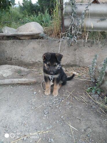 Животные - Норус: Собаки