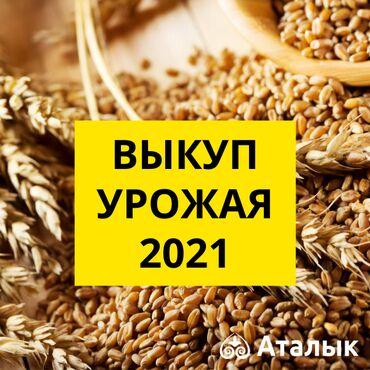 бала караганга кыз керек 2021 in Кыргызстан | БАШКА АДИСТИКТЕР: «аталык» агроөнөржай комплекси 2021 жылдын түшүмүн соя жана жүгөрү