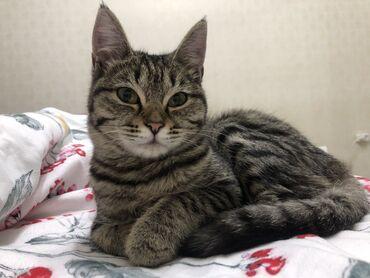 котенок в Кыргызстан: Котёнок Роберт ищет семью, где будет окружён любовью и заботой