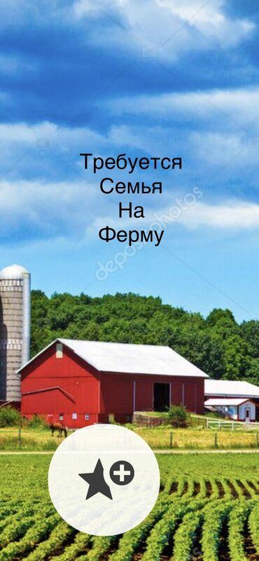 требуется няня с проживанием in Кыргызстан | ДЕТСКИЕ САДЫ, НЯНИ: Требуется семья на ферму Малчы