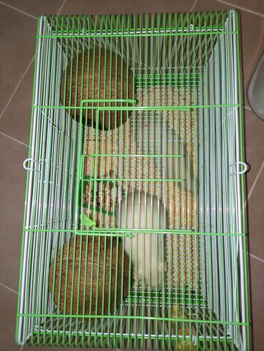 Животные - Аламедин (ГЭС-2): Две крысы, клетка и домики. Срочно продам