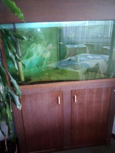 Akvarijum sa 50 ribica komplet... - Novi Banovci