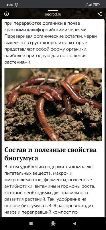 грунт бишкек in Кыргызстан   ГРУЗОВЫЕ ПЕРЕВОЗКИ: Продается биогумосы