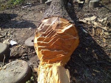 Продаю ствол груши длина 3 метра диаметр 91.5 см. звонить с 9-18:00 в Бишкек