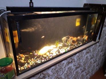 Bakı şəhərində Akvariumlar hamsi bir yerde satilir icinde her cur mirni baliqlar var