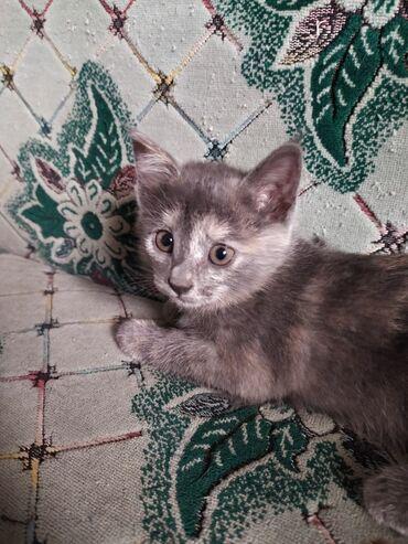 10920 объявлений: Отдам даром котёнка (Девочка). Отдам в добрые заботливые руки котёнка