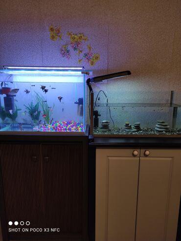 Heyvanlar - Azərbaycan: Akvarium wkafiyla birge satilir 2 dest  1 ci akvarium 85 lit 250 azn 2