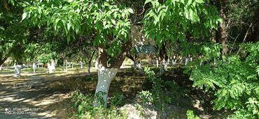 44 elan   DAŞINMAZ ƏMLAK: Bərdə şəhərinin mərkəzində maşın körpüsünün yanında,çayın qırağında sa