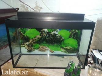 Bakı şəhərində Teze akvarium