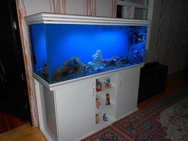 Bakı şəhərində akvarium sifariwleri qebul olunur munasip qiymet keyfiyyetl ve seliqel