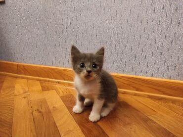 10257 elan: Пристраиваются котята. Родились 20 августа. Рыжие мальчики, остальные