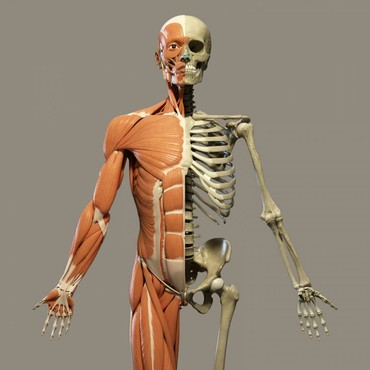 Мода, красота и здоровье в Шопоков: Биорезонансная томография всех органов. выявление и лечение любых забо