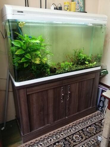 760 объявлений: Заводской аквариум 300 литров 121х40х60/70 аквариум 121х40х75 тумба  П