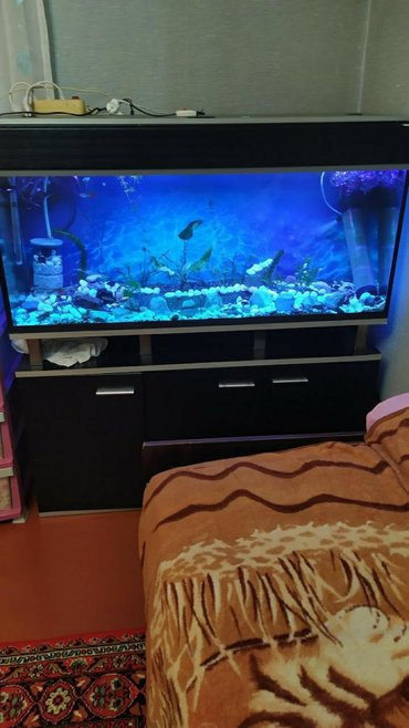 Akvarium herseynen bir yerde satilir tecili elaqe ucun ya zeng ya