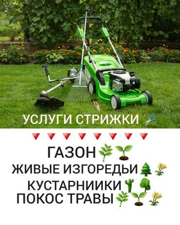 Бытовые услуги в Кыргызстан: Услуга стрижка газон, живых изгородей кустарников. покос  дикий трав о