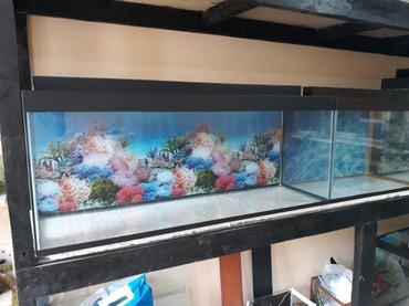 Bakı şəhərində 1 metrelik akvarium cemi 60 bawqalarida var