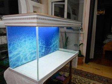 Bakı şəhərində versage akvariumlari sifariwler qebil olunur