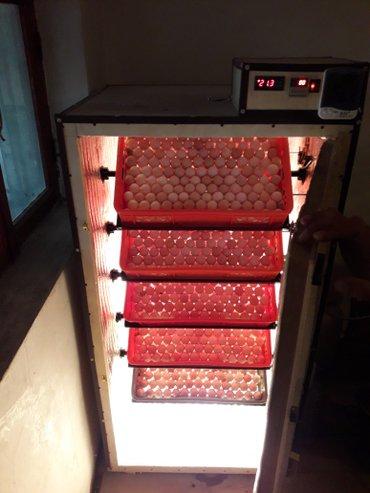 Bakı şəhərində inkubator