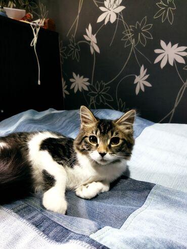 104 объявлений   ЖИВОТНЫЕ: Робкая пушистая кошечка с огромным беличьим хвостиком. Кошечку