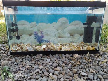 Akvariumlar Şəmkirda: Akvarum her bir seyi isdiyir problemsiz ona gor satiram ki men yeke ak