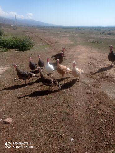 13 объявлений   ЖИВОТНЫЕ: Птицы