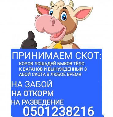 сумки для роддома купить в Кыргызстан: Куплю коров лошадей быков тёлок на мясо