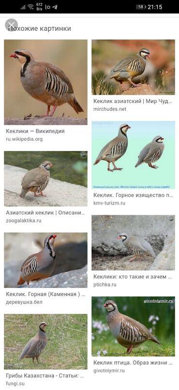 куплю детский манеж в Кыргызстан: Куплю!!!! Куплю!!! Яйцом. Небольшое количество