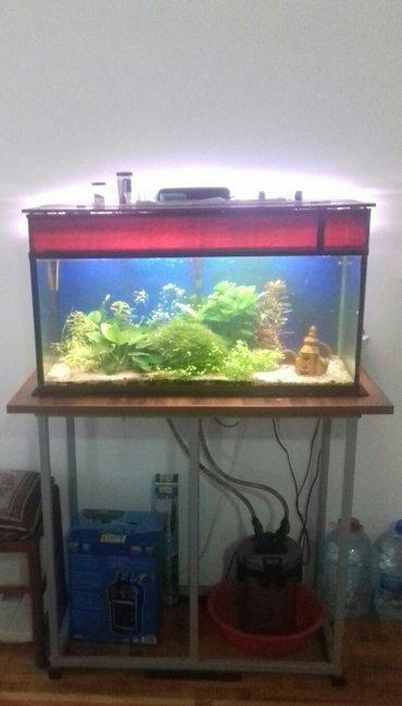 Akvarijum za prodaju  na prodaju sve sa slike: akvarijum, ribe, 150g s in Belgrade