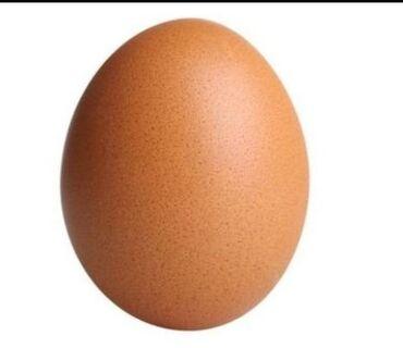 яйца-брама-цена в Кыргызстан: Продаю яйца брама