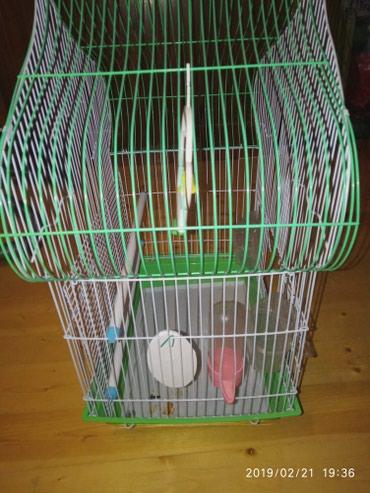 Клетка для попугаев состояние отличное. в Сокулук