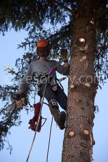 Бак кыям.Пилю деревья.Бишкек и пригороды.Спилить дерево.Срубить