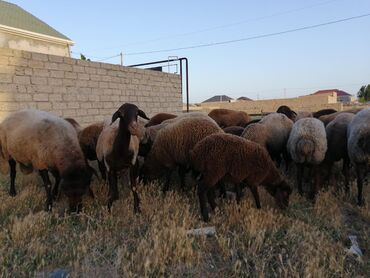 qala konstruktorları - Azərbaycan: Qala qoynlari