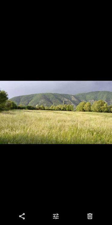 Torpaq sahələrinin satışı 249 sot Kənd təsərrüfatı, Bələdiyyə