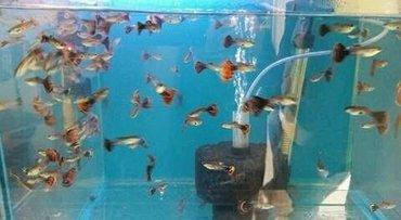 bmw-1-серия-120i-mt - Azərbaycan: .Qupbi balıqları 1 azn Whatsappada yaza bilərsiz