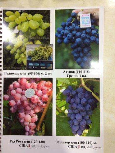 Саженцы винограда столовых в Лебединовка