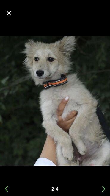 Девочка собака ищет дом 👧 Возраст 5 месяцев .  ✅Стерилизую рожать н