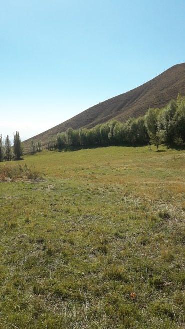 Ферма ,дом сараями, баней, в Бишкек