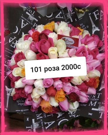 Акция 101 роза Кения в Сокулук