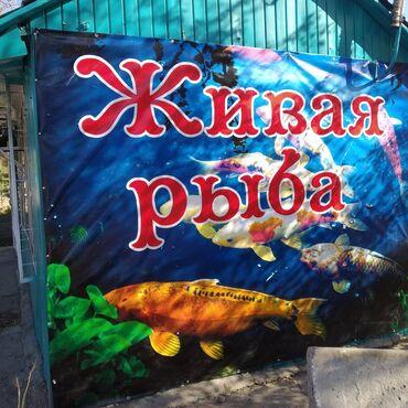 Живая рыба в Беловодске на против Роддома