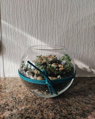 Горшки для растений - Кыргызстан: Мини-сад, флорариум Для себя или на подарок Не прихотливые С собственн