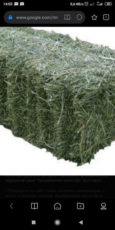 Животные - Чон Сары-Ой: Продается тюки с поле бишкек с манас ускун