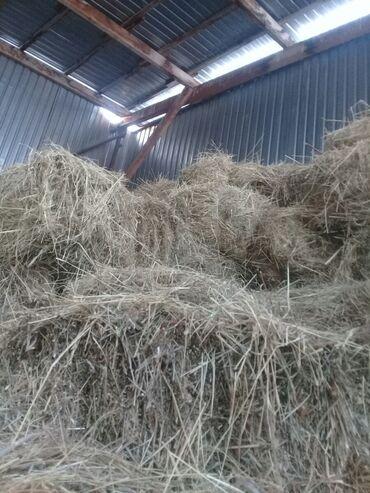 gtx 1080 ti цена в Кыргызстан: Продаю горный сена в тюках !Адрес Заря ново павловка ! и ечмёную сал