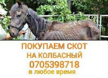 диски борбет а в Кыргызстан: Покупаем лошадей бычков коров телок а также вынужденный забой.звоните