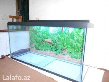 Bakı şəhərində 325 litrelik akvarium 170 azn 10 mml wuwenin qalinliqi Real alıcıya